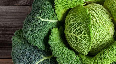 ricetta per cucinare la verza come cucinare la verza 5 ricette sfiziose e buone