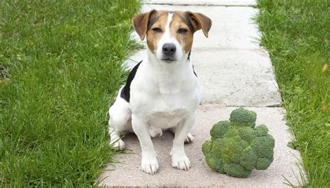 what veggies can dogs eat 6 vegetables dogs can eat according to science cheaply pet supplies