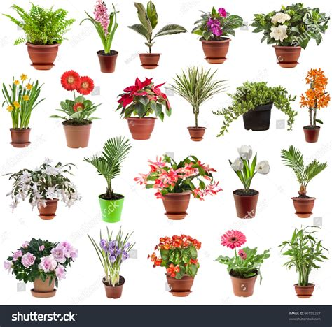 Flowering House Plants For Windows Collection Set Houseplants Flower Pot Isolated Stock Photo