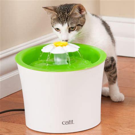 Cat It Senses 4 general discussion november 07 2017 femalefashionadvice