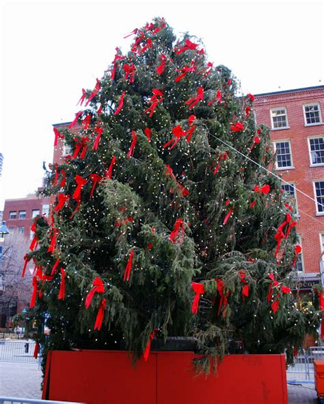 mille fiori favoriti christmas trees in manhattan