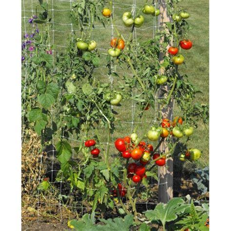 Trellis Vegetables ultimate vegetable trellis skyscraper garden free shipping