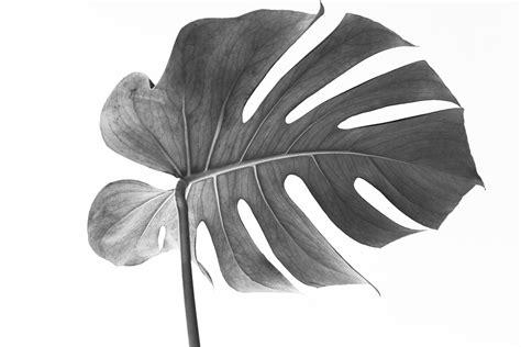 Mooie Planten Voor Binnen by 5 Mooie Planten Voor Binnen Woonprettig Nl