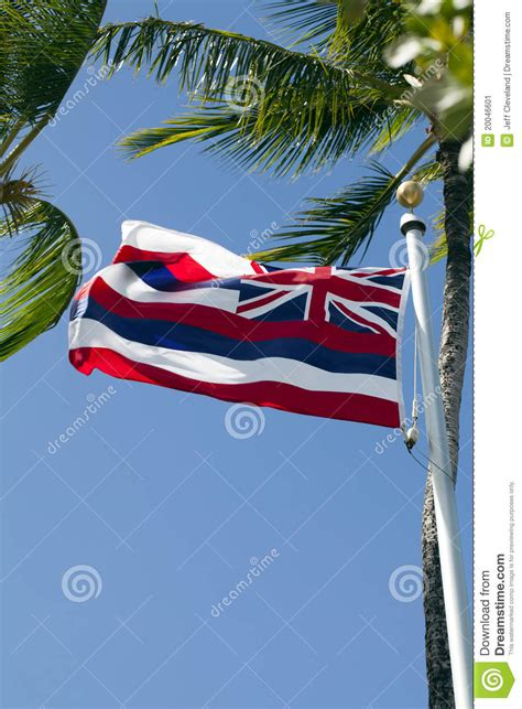 palm reading for millennials flags hawaii state flag on pole with palm trees stock image