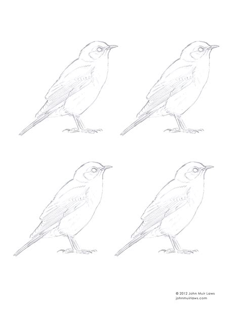 how to paint a mountain bluebird step by step