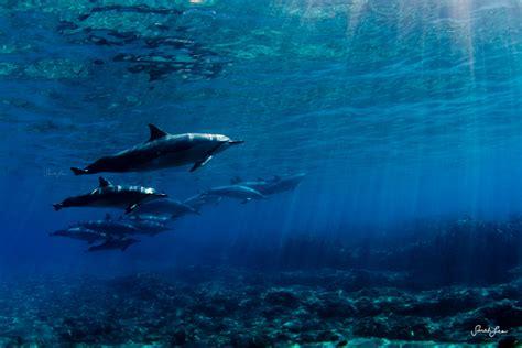 magestic underwater   sarah lee  pics