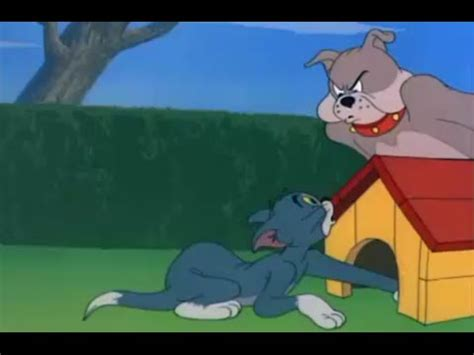 Tom And Jerry Dog Vs Cat Episode Funnycat Tv