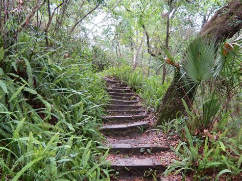 Ravine Gardens State Park by Ravine Gardens State Park Florida No Editing