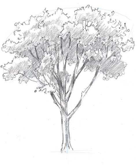 simple drawing tree learn how to draw trees in this simple step by step