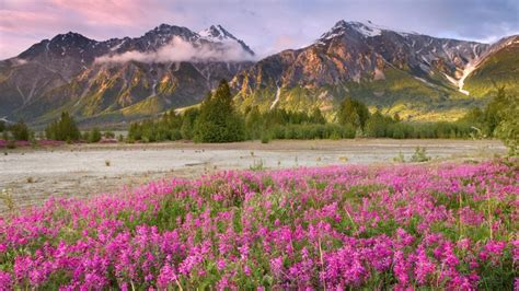 zachi spring mountain landscape spring mountain landscape canada meadow flowers with