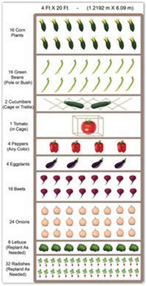 Vegetable Garden Layouts on Pinterest   Garden Layouts