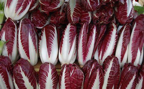 cucinare radicchio rosso radicchio rosso di treviso igp ricette coltivazione