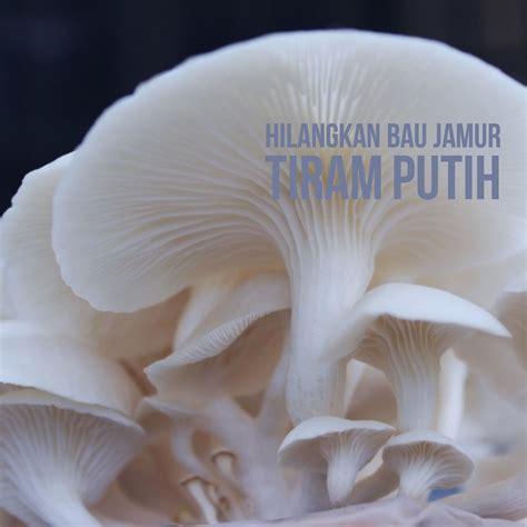 tips menghilangkan aroma aneh  jamur tiram putih