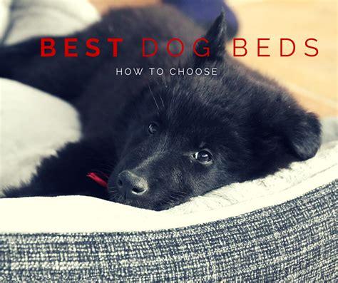 orthopedic dog bed reviews top best orthopedic dog bed reviews models dog beds and