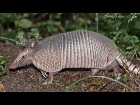unique weird  amazing animal facts part  youtube