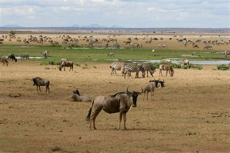 best safari in kenya top 10 tourist friendly places to visit in africa widest