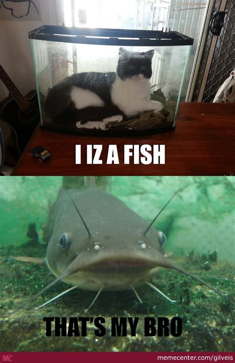 Catfish Meme - new kind of catfish by gilveis meme center