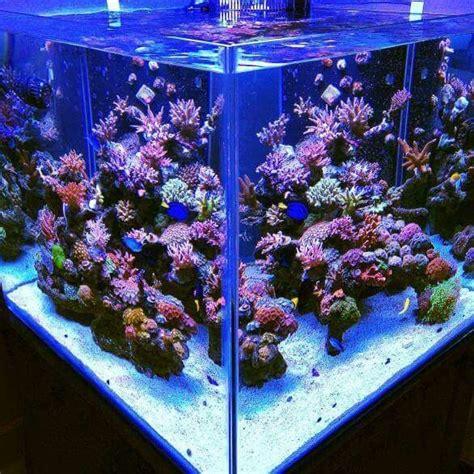cube aquarium aquascape 17 best images about aquascaping on pinterest bonsai