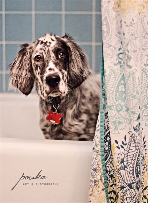 english setter girl dog names 17 best images about english setter love on pinterest
