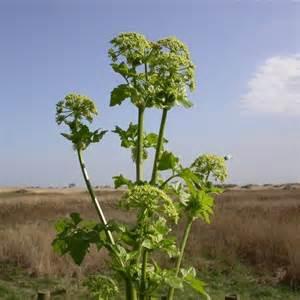 Quel Legume Planter En Octobre by Quel L 233 Gume Planter En Septembre