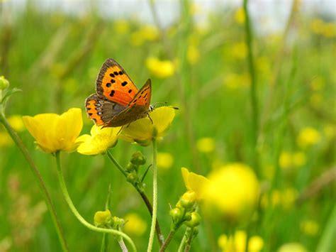 fotografie di fiori primavera primavera freschezza farfalle fotografie fiori foto