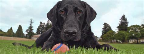 oregon humane society dogs pet resources oregon humane society