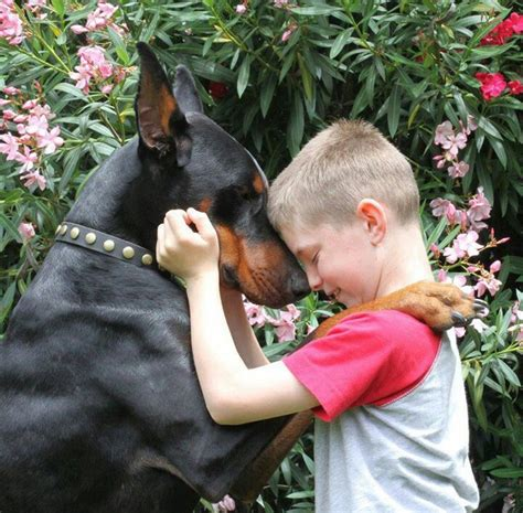 protective breeds 11 pictures of protective breeds who ve got your back