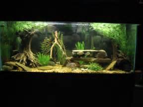 cichlids com tank examples sa ca 75 gallon cichlid