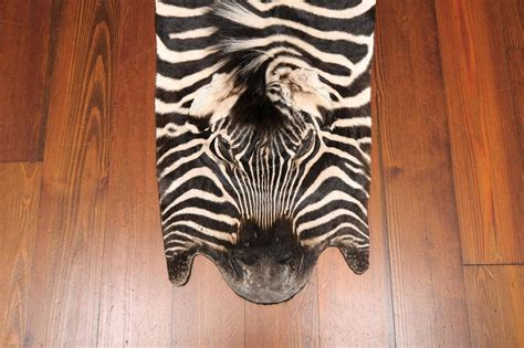 Real Zebra Rug by Authentic Zebra Skin Rug For Sale At 1stdibs