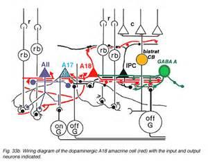 1 fisher wiring diagram