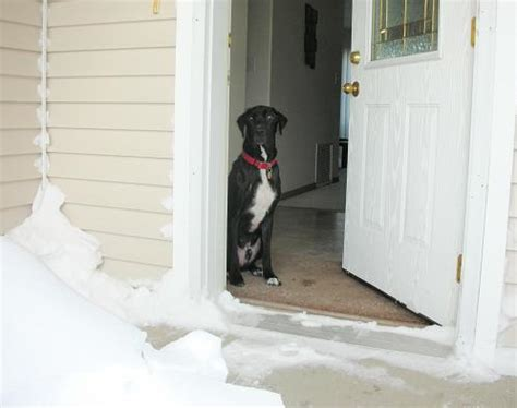 teach not to bark 13 ideas to teach your not to bark at the doorbell
