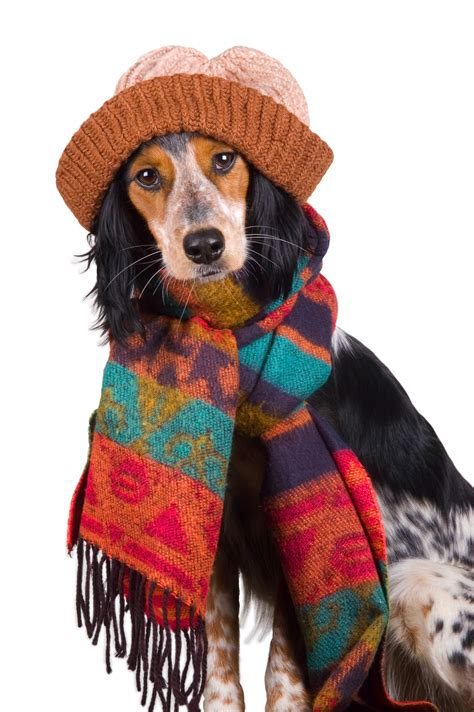 how to keep dogs warm in the winter tips on keeping dogs warm in the winter