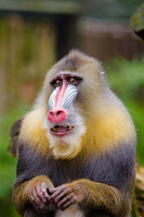 jolly monkey  pexels  stock