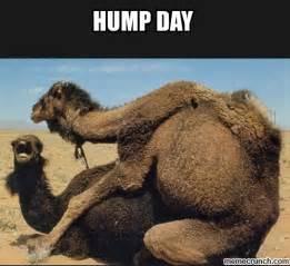 Meme Hump Day - hump day