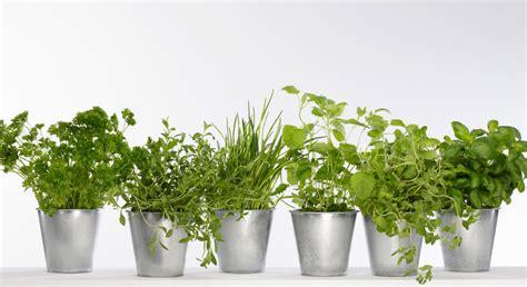 Aromates En Pot by Mon Mini Jardin De Plantes Aromatiques Prima