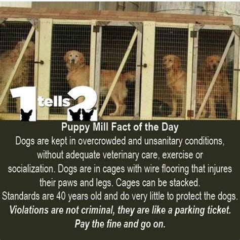 facts about puppy mills 17 best images about puppy mills exposed on water boy and
