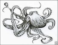 How To Draw A Realistic Octopus Step By Step