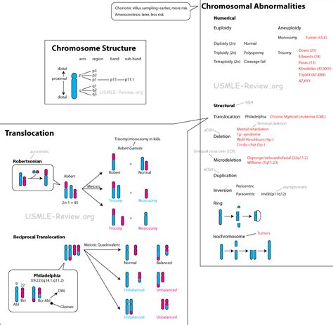 Is Night Blindness Hereditary Chromosomal Abnormality Albinism Search Results Dunia