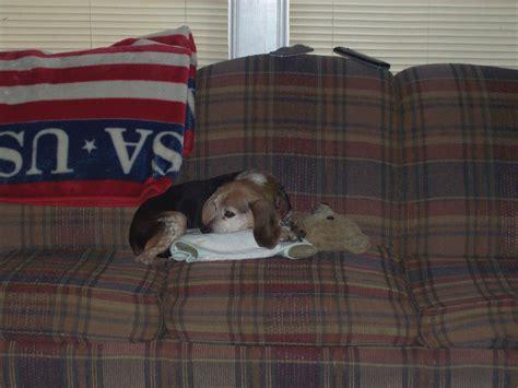 puppy lucky lucky dogs photo 6554621 fanpop