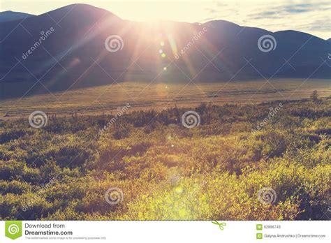 polar tundra stock photo image 62896743