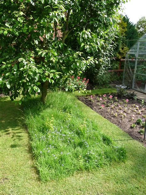 grass that looks great gardening for wildlife