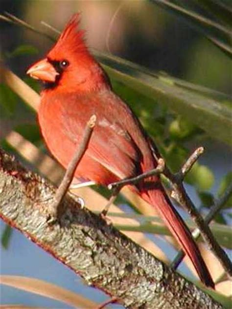 birding florida