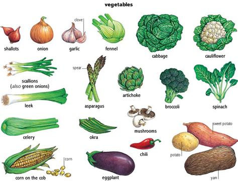 a vegetables list vegetable noun definition pictures pronunciation and