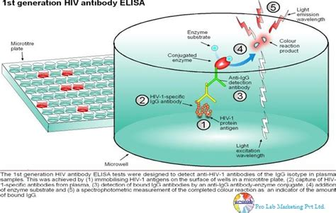 test elisa hiv process of elisa kits welcome to science products