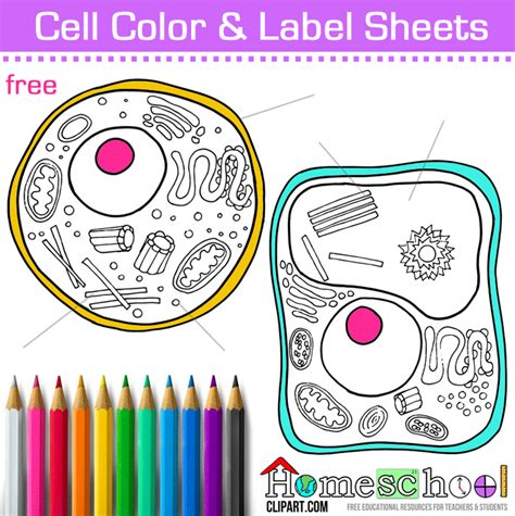 free coloring pages of animal cell drawing