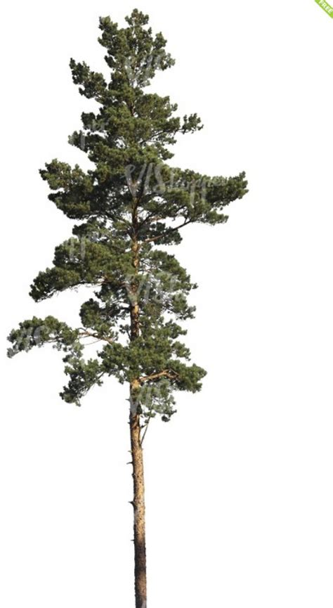 How To Make A Pine Tree Out Of Paper - vwartclub pine tree