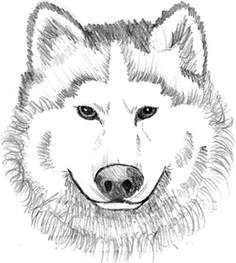 kidscolouringpages orgprint amp download winged wolf coloring pages kidscolouringpages org