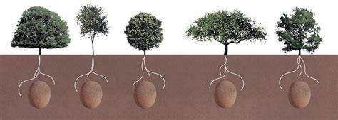 Cremation Tree Planter by Bye Bye Coffins These Organic Burial Pods Turn Your Loved
