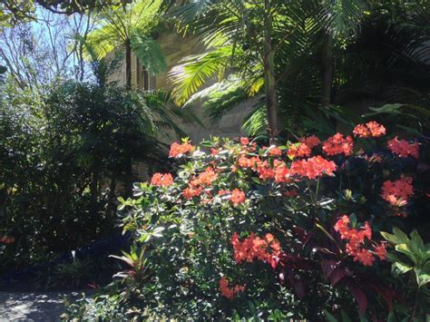 subtropical garden ideas landscaping photo gallery