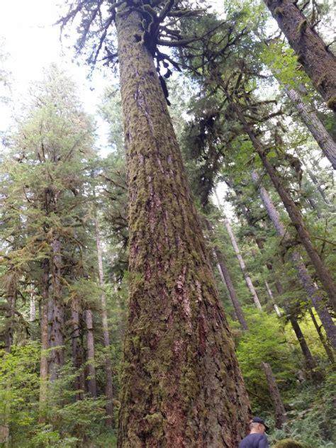 100 utah christmas tree farms 11 places to get